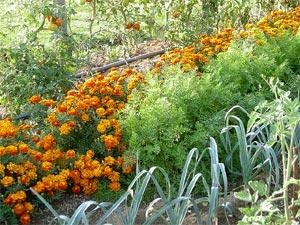 Association plantes